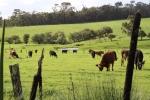 General Dairy Farm