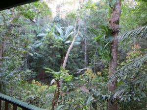 Narrows Rainforest